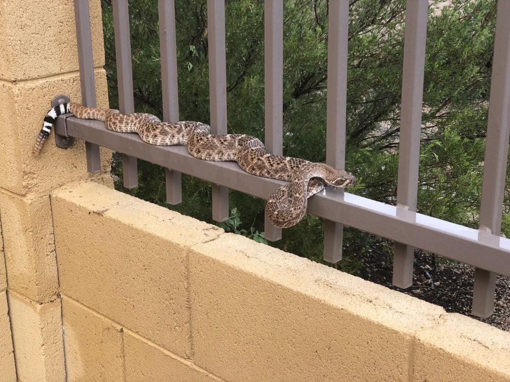 rattlesnake fences